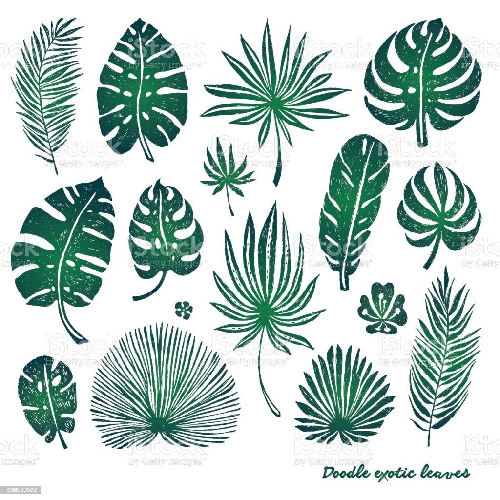 plante exotique vector