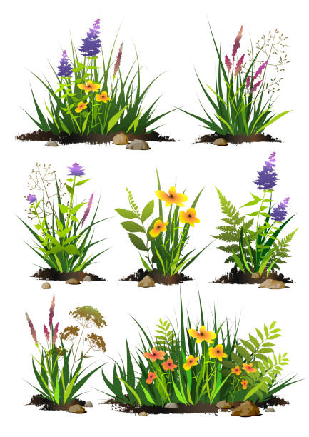 set of  green grass and flowers with pieces of black soil and stones. grass bushes of different shapes. - куст stock illustrations