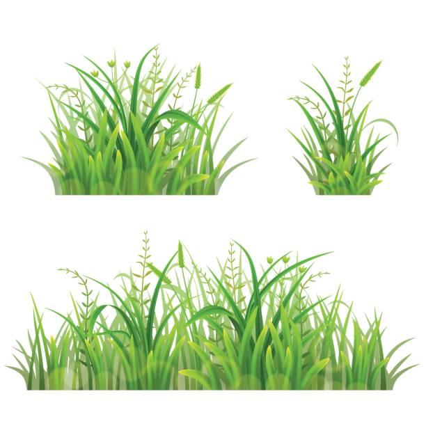 illustrations, cliparts, dessins animés et icônes de ensemble d'herbe verte - plante sauvage
