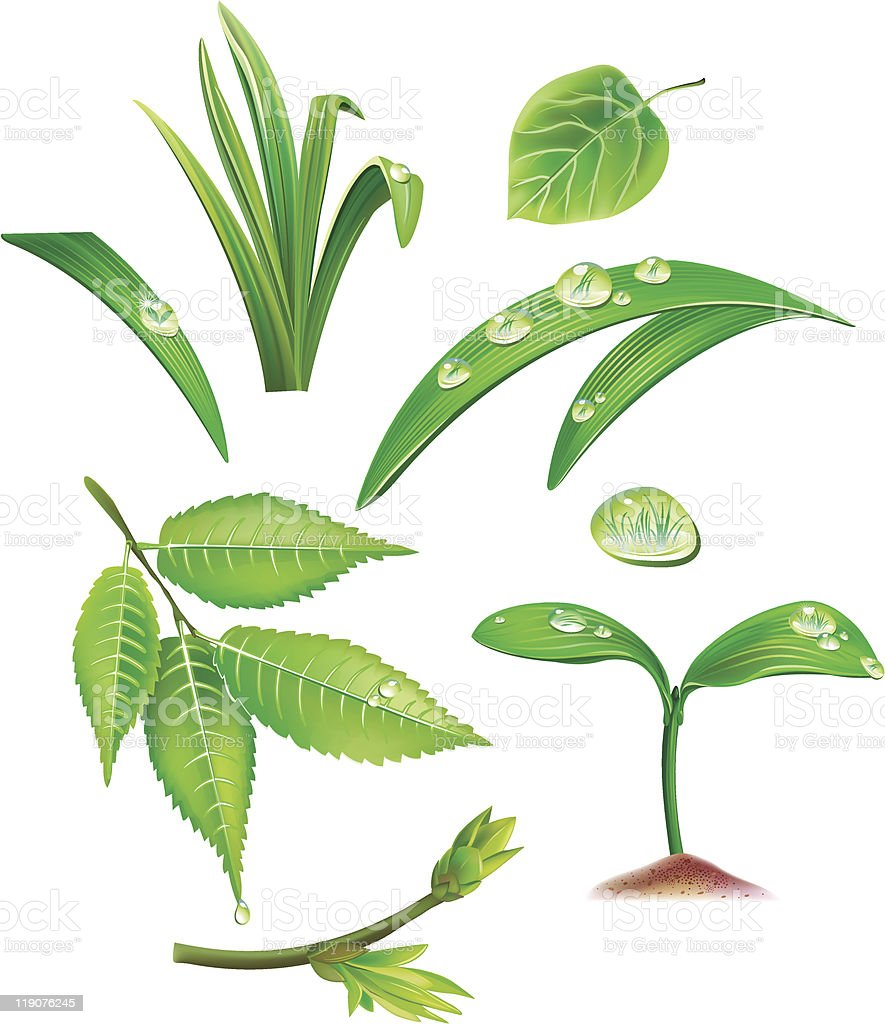 Set of green leaves and grass royalty-free stock vector art