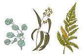 Set of green leaves (greenery): branches Eucalyptus seeded (radiate, peppermint), Forest fern, Eucalyptus silver dollar (redbox) on white background. Digital draw in engraving vintage style, vector