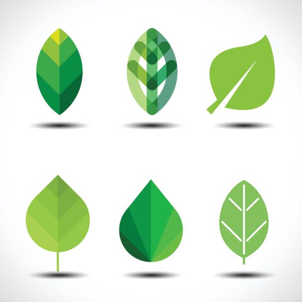illustrazioni stock, clip art, cartoni animati e icone di tendenza di set of green leaves design elements - foglie