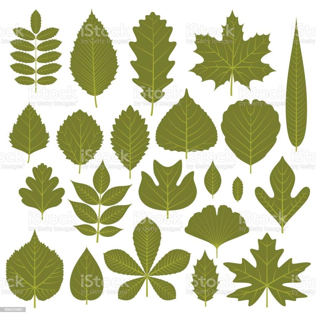 Set of  green leaves from different trees. Vector illustration. vector art illustration