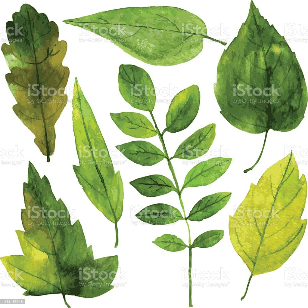 set of green leaves in watercolor vector art illustration