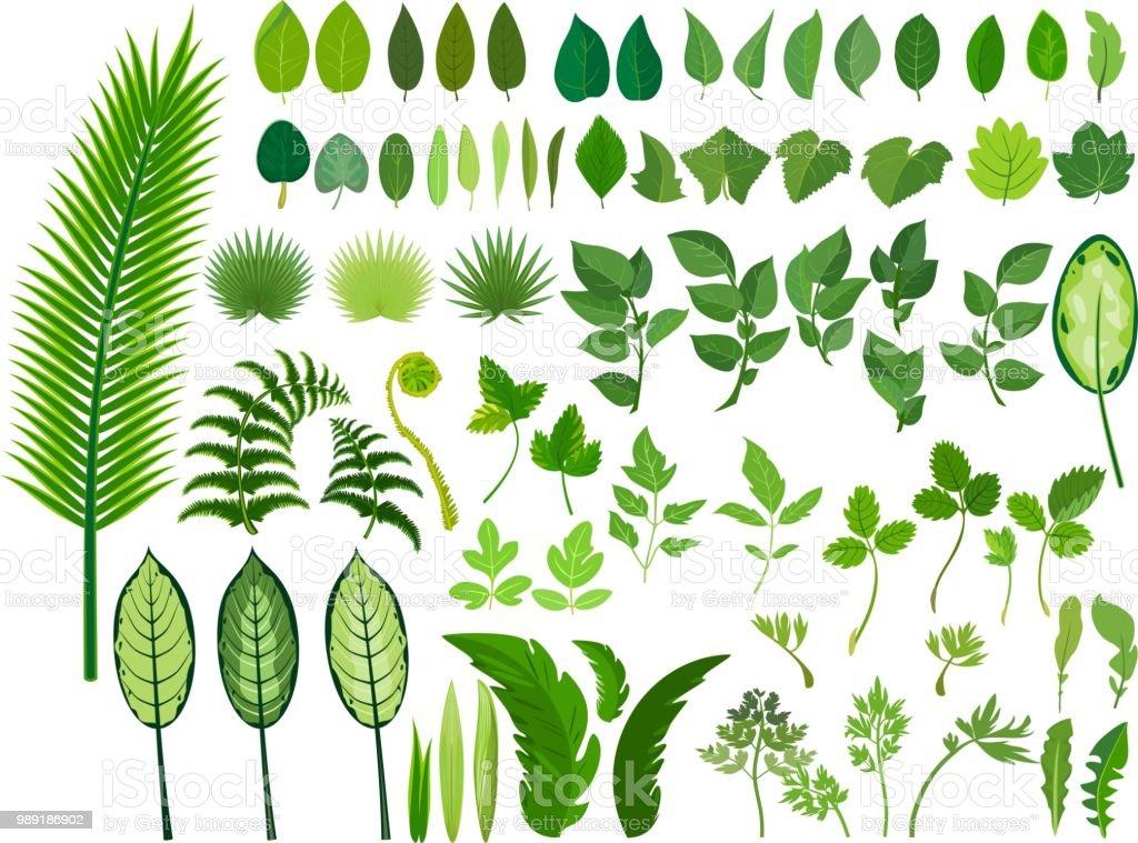 8dad115e603 Set van groene bladeren van verschillende soorten en maten op witte  achtergrond royalty free set van