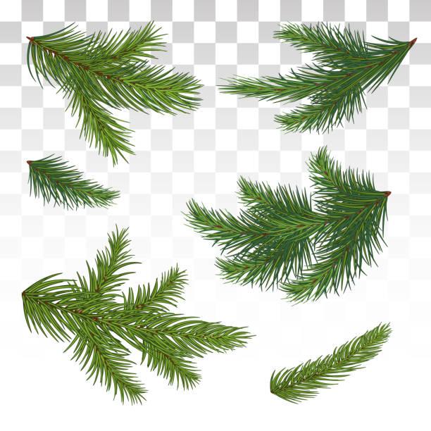bildbanksillustrationer, clip art samt tecknat material och ikoner med uppsättning av grön tall grenar. isolerade. jul. decor. julgranen. vektorillustration. eps-10. - ädelgran