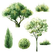 Hand drawn watercolor illustration. Set of various trees and bushes. Green plants isolated on white.