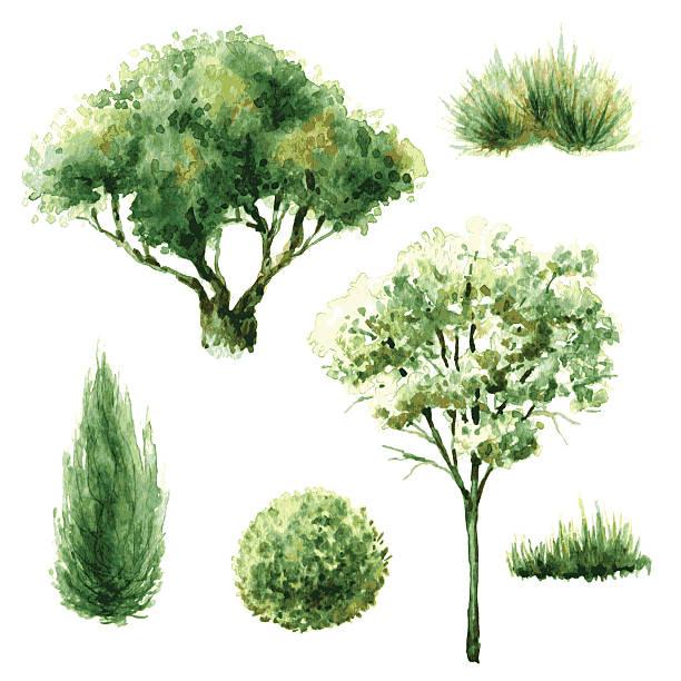 bildbanksillustrationer, clip art samt tecknat material och ikoner med set of green trees and bushes. - buske
