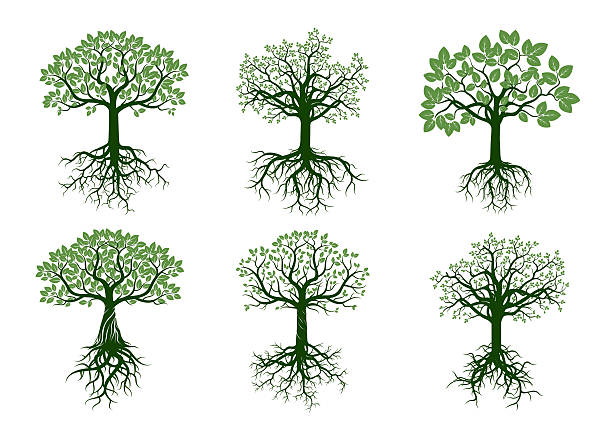 Set of Green Trees and Roots. Vector Illustration. Set of Green Trees and Roots. Vector Illustration. origins stock illustrations