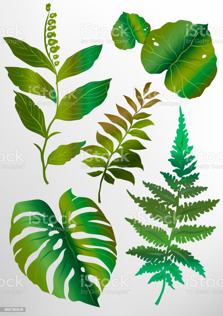 A Set Of Green Tropical Exotic Leaves Of Different Shapes Stock Illustration Download Image Now Istock Download premium png of hand drawn tropical leaves png transparent background by manotang about leaf, leave, botanical, plant and. a set of green tropical exotic leaves of different shapes stock illustration download image now istock