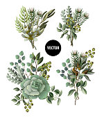 Set of greenery leaves and succulent bouquet in watercolor style. Eucalyptus, magnolia, fern and other