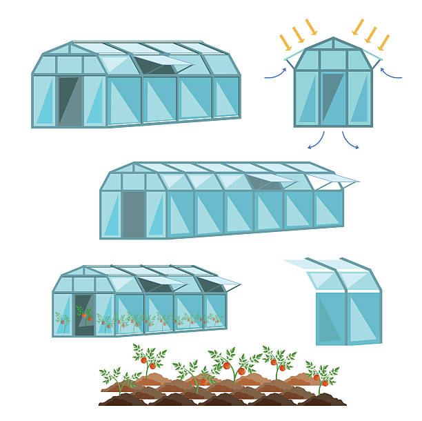 Best Greenhouse Illustrations, Royalty-Free Vector ...