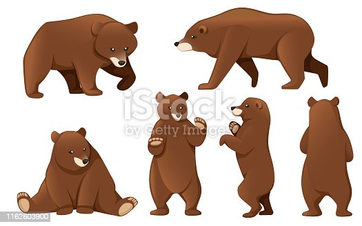 Set of Grizzly bears. North America animal, brown bear. Cartoon animal design. Flat vector illustration isolated on white background.