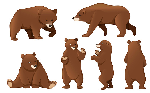 Set of Grizzly bears. North America animal, brown bear. Cartoon animal design. Flat vector illustration isolated on white background