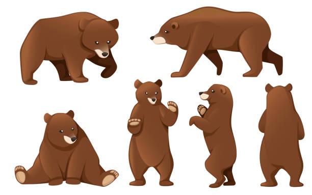 illustrations, cliparts, dessins animés et icônes de ensemble d'ours grizzli. animal d'amérique du nord, ours brun. conception animale de dessin animé. illustration plate de vecteur d'isolement sur le fond blanc - ours