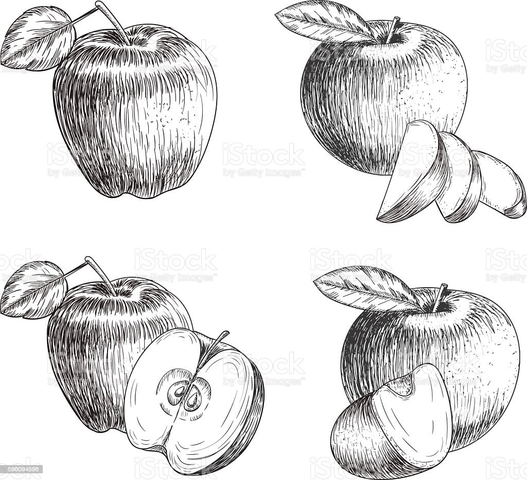 Set of hand drawn apple. Vintage sketch style illustration. Organic royalty-free set of hand drawn apple vintage sketch style illustration organic stock vector art & more images of agriculture