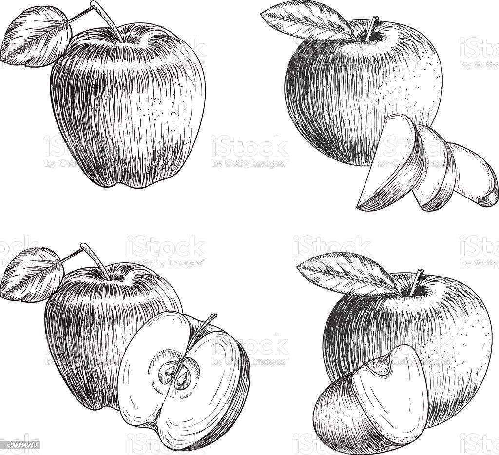 Set of hand drawn apple. Vintage sketch style illustration. Organic Lizenzfreies set of hand drawn apple vintage sketch style illustration organic stock vektor art und mehr bilder von abnehmen