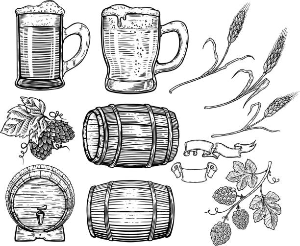 Set of hand drawn beer design elements. Hop, wheat, wood barrels, beer mugs. Design element for poster, card, menu, emblem, badge. Set of hand drawn beer design elements. Hop, wheat, wood barrels, beer mugs. Design element for poster, card, menu, emblem, badge. Vector image beer stock illustrations