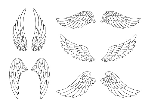 Set of hand drawn bird or angel wings of different shape in open position. Contoured doodle wings set