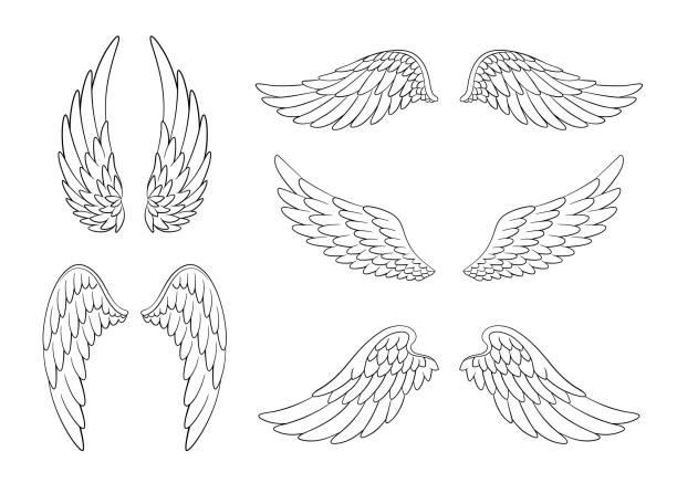 ilustraciones, imágenes clip art, dibujos animados e iconos de stock de conjunto de alas de pájaro o ángel dibujadas a mano de diferente forma en posición abierta. conjunto de alas de garabato contorneadas - tatuajes de ángeles