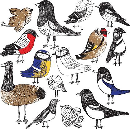 Hand drawn vector illustration of birds