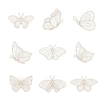 Set of hand drawn butterflies. Vector illustration