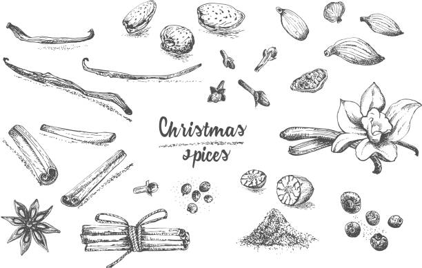 Set of hand drawn Christmas winter spices pattern. Traditionally used in made desserts, hot mulled wine, homemade cookies. Set of hand drawn Christmas winter spices pattern. Traditionally used in made desserts, hot mulled wine, homemade cookies. Good idea for templates menu, recipes, greeting cards. Vector illustration allspice stock illustrations