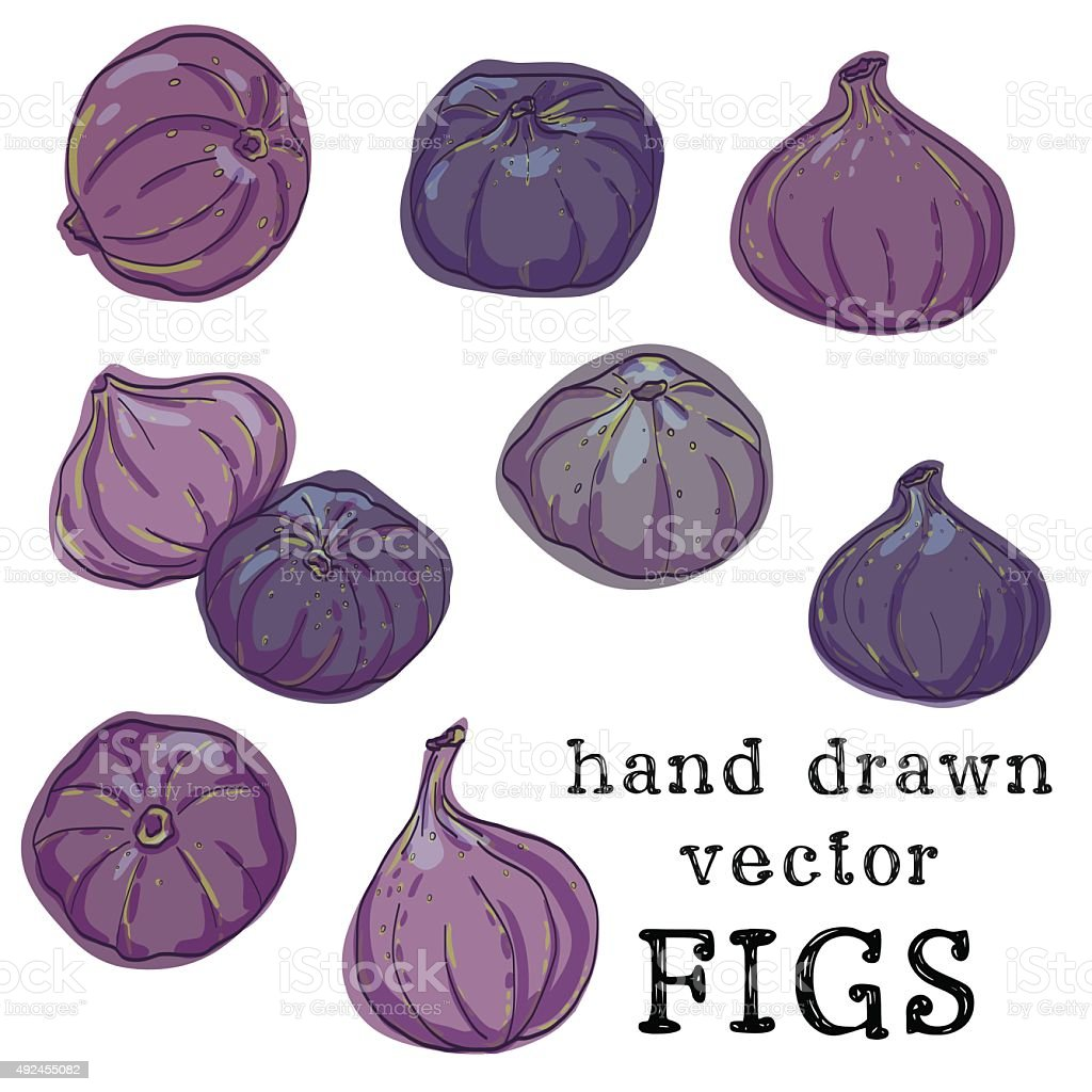 Set of hand drawn colorful sketchy figs vector art illustration