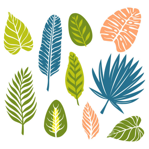 Free Palm Leaves Vector Art Monstera plant leaf, banana plants and green tropics palm leaves isolated vector illustration. free palm leaves vector art