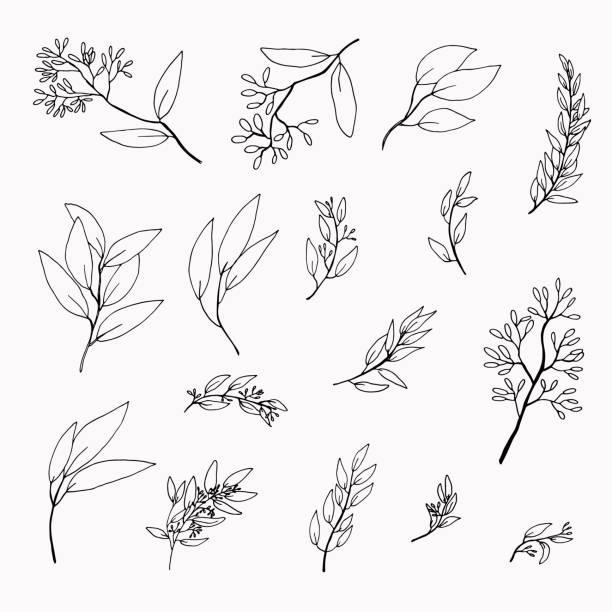 zestaw ręcznie rysowanych gałązek eukaliptusowych - gałązka stock illustrations