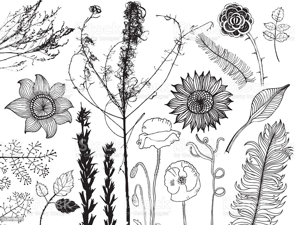 Set of hand drawn flowers, leaves and silhouettes of plants royalty-free stock vector art