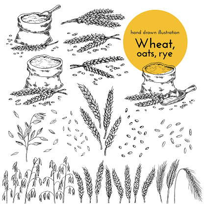 Set Of Hand Drawn Illustrations Of Wheat Oats Rye Sketches For The Design Of Cafes Restaurants Food Packages - Arte vetorial de stock e mais imagens de Agricultura