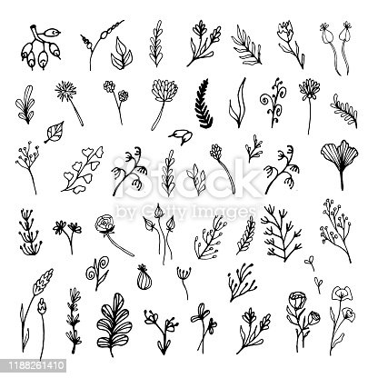 Set of hand drawn leaves, flowers, herbs. Black and white floral elements. Natural illustration with simple plants for wallpaper, scrapbooking, wrapping paper, wedding design, logo & greeting card.