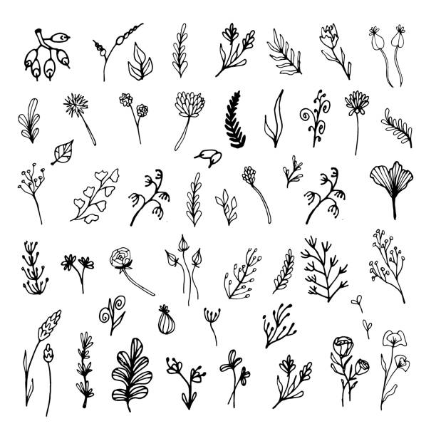 Set of hand drawn leaves, flowers, herbs. Black and white floral elements. Natural illustration with simple plants for wallpaper, scrapbooking, wrapping paper, wedding design, logo & greeting card. Set of hand drawn leaves, flowers, herbs. Black and white floral elements. Natural illustration with simple plants for wallpaper, scrapbooking, wrapping paper, wedding design, logo & greeting card. fragility stock illustrations
