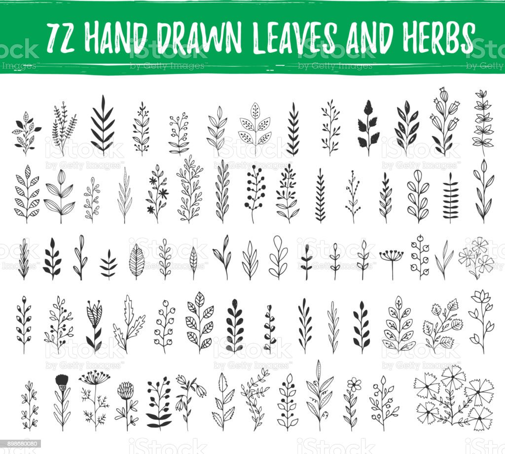 Set of hand drawn leaves, herbs, branches. Nature design elements. Vector. Isolated. vector art illustration