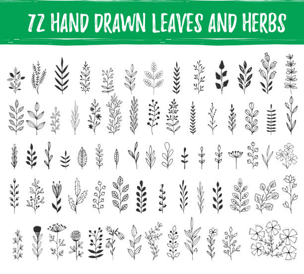 set of hand drawn leaves, herbs, branches. nature design elements. vector. isolated. - twig stock illustrations, clip art, cartoons, & icons