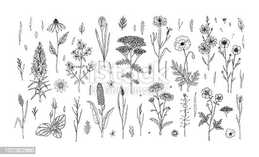 Set of hand drawn meadow flowers and herbs isolated on white. Vector illustration in sketch style
