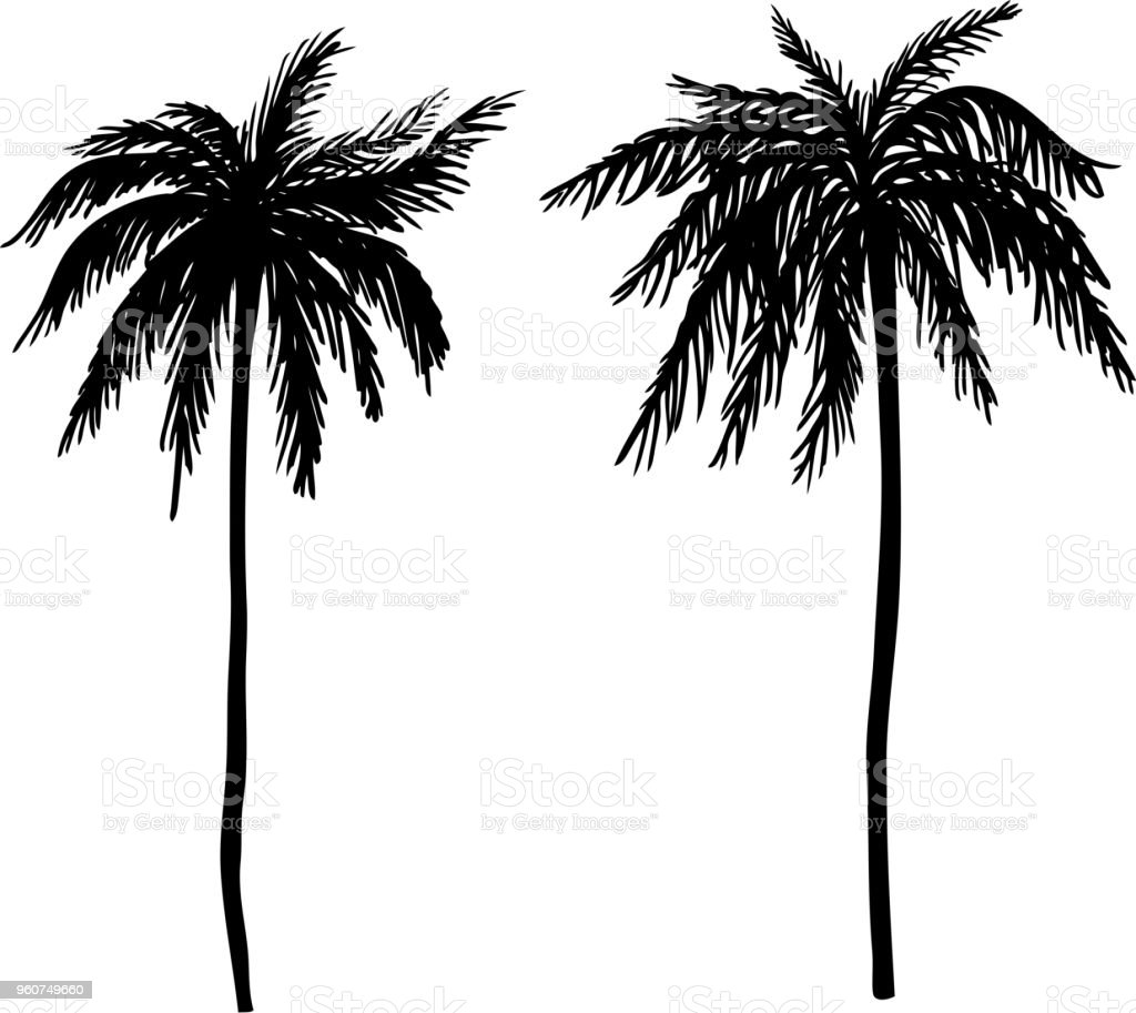 Set of hand drawn palm tree illustrations. Design element for poster, card, banner, t shirt. vector art illustration