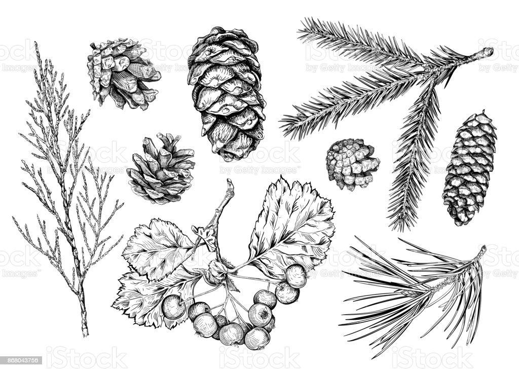 Set of hand drawn plants - illustrazione arte vettoriale