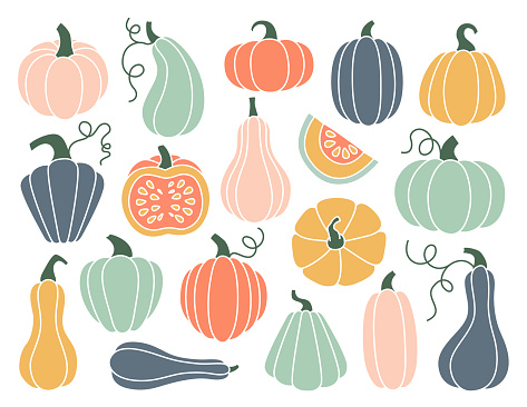Set of hand drawn pumpkin of various shapes and pastel colors. Flat pumpkins and squash. Vector elements for thanksgiving, harvest and halloween.