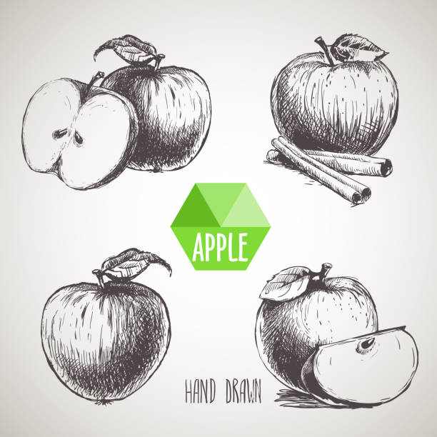 illustrazioni stock, clip art, cartoni animati e icone di tendenza di set of hand drawn sketch apples. - mela