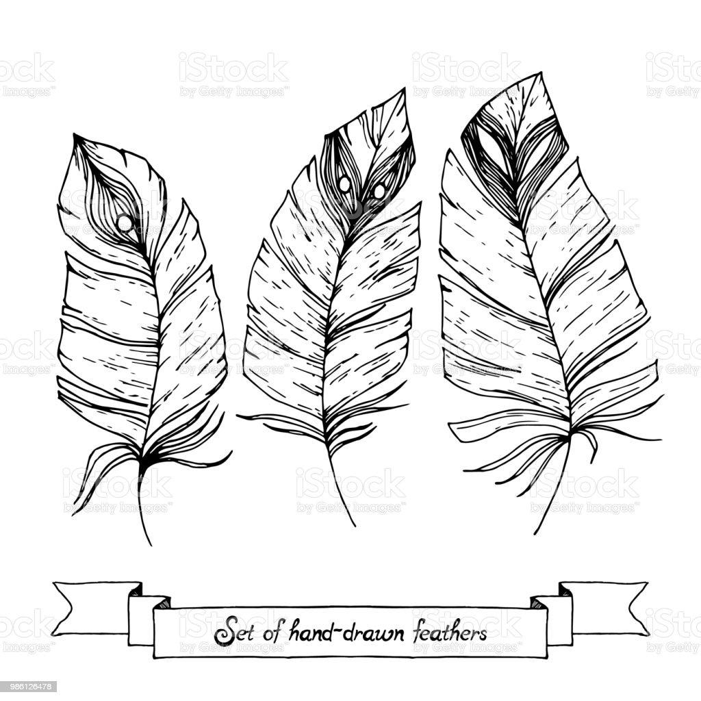 Ilustración De Conjunto De Croquis Dibujado Mano Doodle Plumas