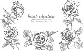 Set of Hand drawn sketch roses, lives and branches Detailed vintage botanical illuatration. Floral frame. Black silhouette isollated on white background. Vector Creative graphic art in engraving style