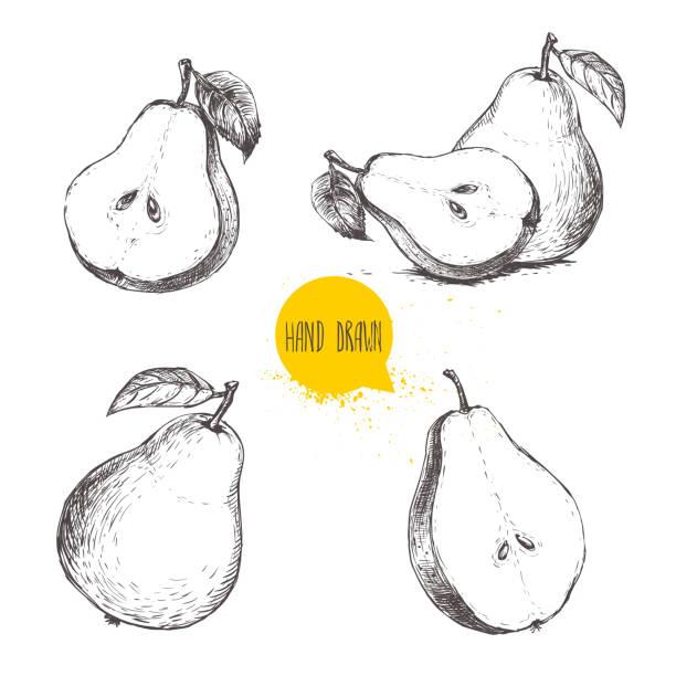 Set of hand drawn sketch style pears. – Vektorgrafik