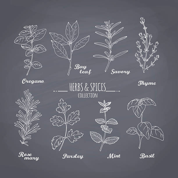Set of hand drawn spicy herbs on chalkboard background Set of hand drawn spicy herbs on chalkboard background. Chalk style condiments for your design. Vector illustration basil stock illustrations