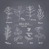 Set of hand drawn spicy herbs on chalkboard background