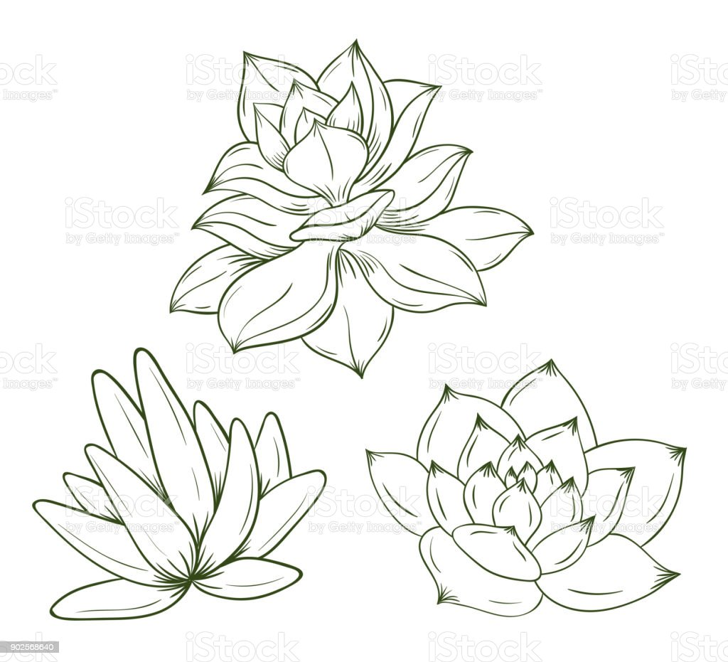 Set of hand drawn succulents. Vector illustration. vector art illustration