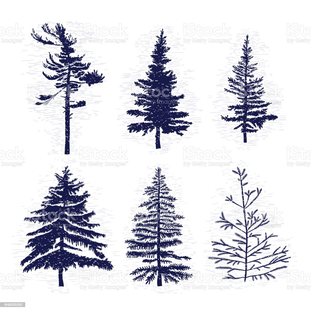 Set of hand drawn textured fir tree vector illustration. Silhouette of the grunge pine trees. vector art illustration