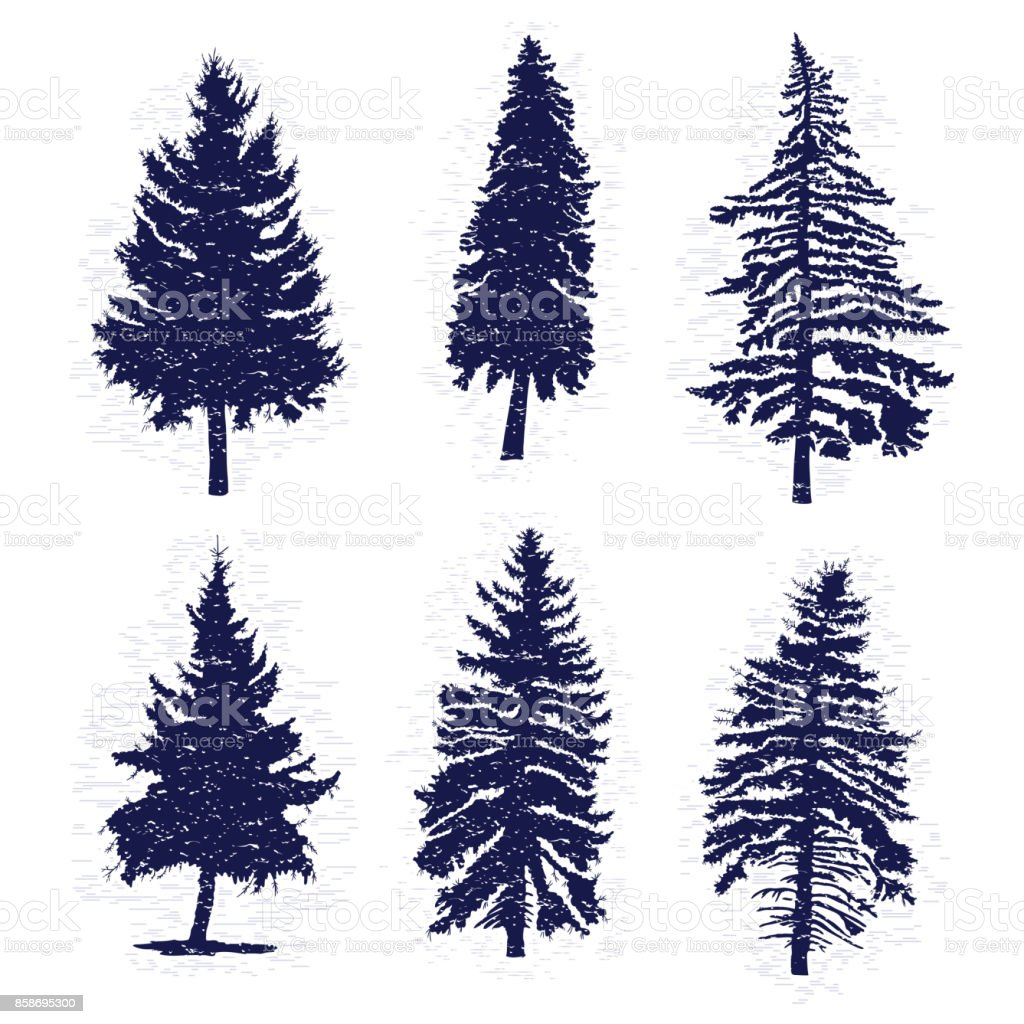 Set Of Hand Drawn Textured Fir Tree Vector Illustration Silhouette Of The Grunge Pine Trees Stock Illustration Download Image Now