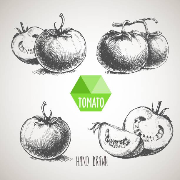 Set of hand drawn tomato Set of hand drawn tomato. Organic eco food tomato stock illustrations